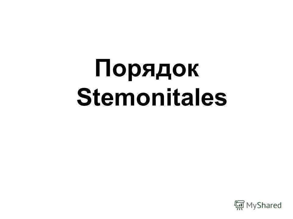 Порядок Stemonitales