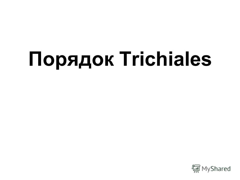 Порядок Trichiales