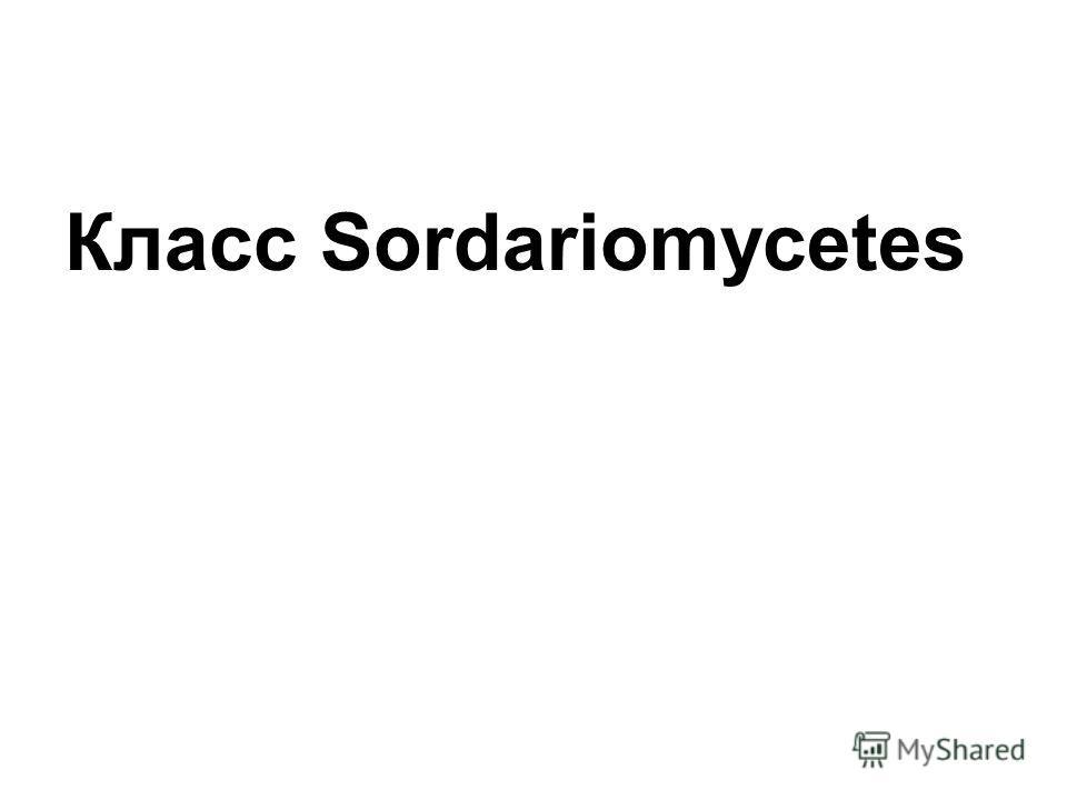 Класс Sordariomycetes