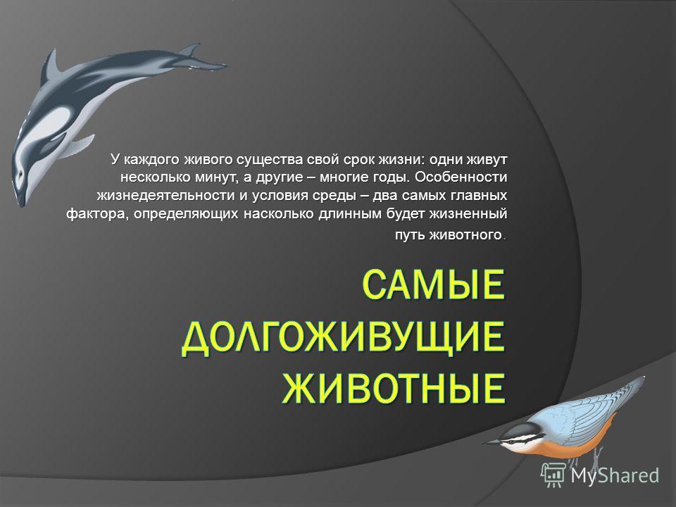 У каждого живого существа свой срок жизни: одни живут несколько минут, а другие – многие годы. Особенности жизнедеятельности и условия среды – два самых главных фактора, определяющих насколько длинным будет жизненный путь животного.