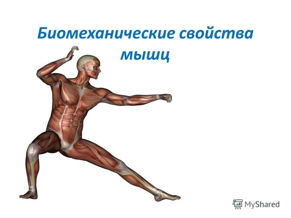 Биомеханические свойства мышц