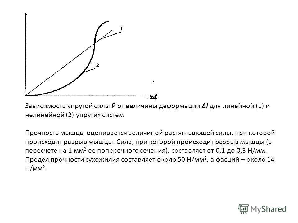 Зависимость упругой силы Р от величины деформации Δl для линейной (1) и нелинейной (2) упругих систем Прочность мышцы оценивается величиной растягивающей силы, при которой происходит разрыв мышцы. Сила, при которой происходит разрыв мышцы (в пересчет