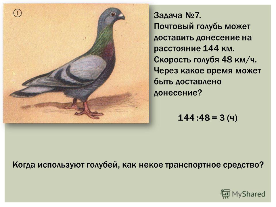 Задача 7. Почтовый голубь может доставить донесение на расстояние 144 км. Скорость голубя 48 км/ч. Через какое время может быть доставлено донесение? 144 :48 = 3 (ч) Когда используют голубей, как некое транспортное средство?