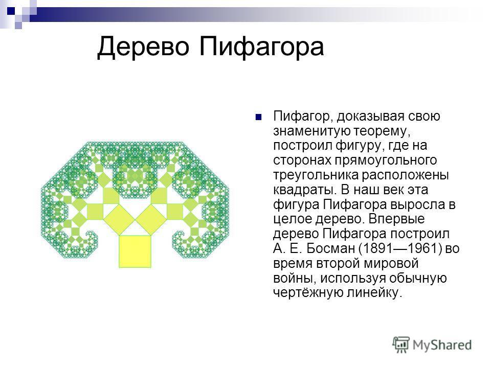 Дерево Пифагора Пифагор, доказывая свою знаменитую теорему, построил фигуру, где на сторонах прямоугольного треугольника расположены квадраты. В наш век эта фигура Пифагора выросла в целое дерево. Впервые дерево Пифагора построил А. Е. Босман (189119