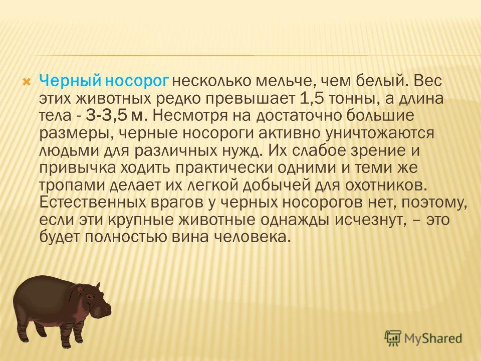 Черный носорог несколько мельче, чем белый. Вес этих животных редко превышает 1,5 тонны, а длина тела - 3-3,5 м. Несмотря на достаточно большие размеры, черные носороги активно уничтожаются людьми для различных нужд. Их слабое зрение и привычка ходит