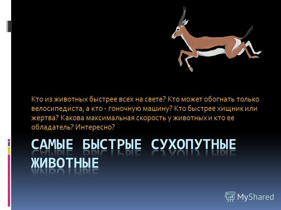 Кто из животных быстрее всех на свете? Кто может обогнать только велосипедиста, а кто - гоночную машину? Кто быстрее хищник или жертва? Какова максимальная скорость у животных и кто ее обладатель? Интересно?