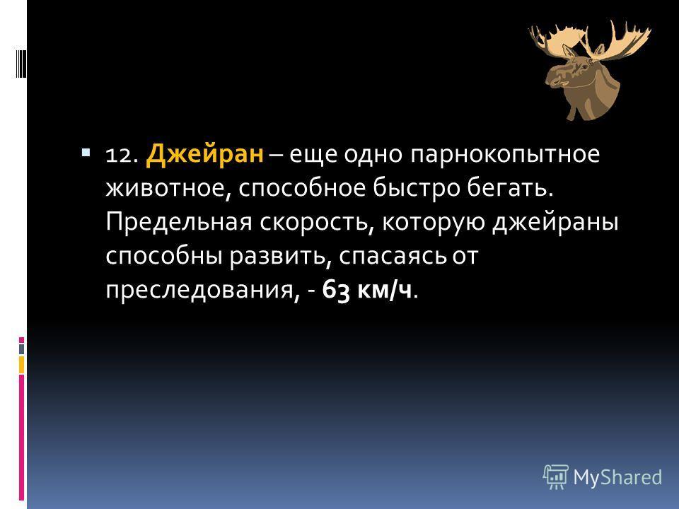 12. Джейран – еще одно парнокопытное животное, способное быстро бегать. Предельная скорость, которую джейраны способны развить, спасаясь от преследования, - 63 км/ч.
