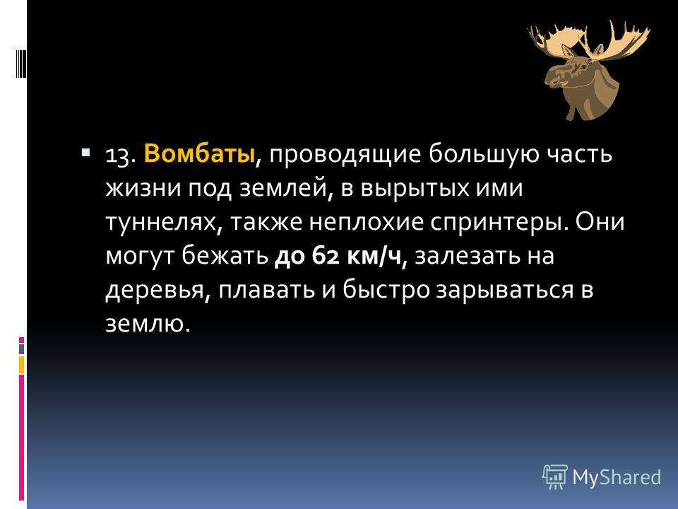 13. Вомбаты, проводящие большую часть жизни под землей, в вырытых ими туннелях, также неплохие спринтеры. Они могут бежать до 62 км/ч, залезать на деревья, плавать и быстро зарываться в землю.