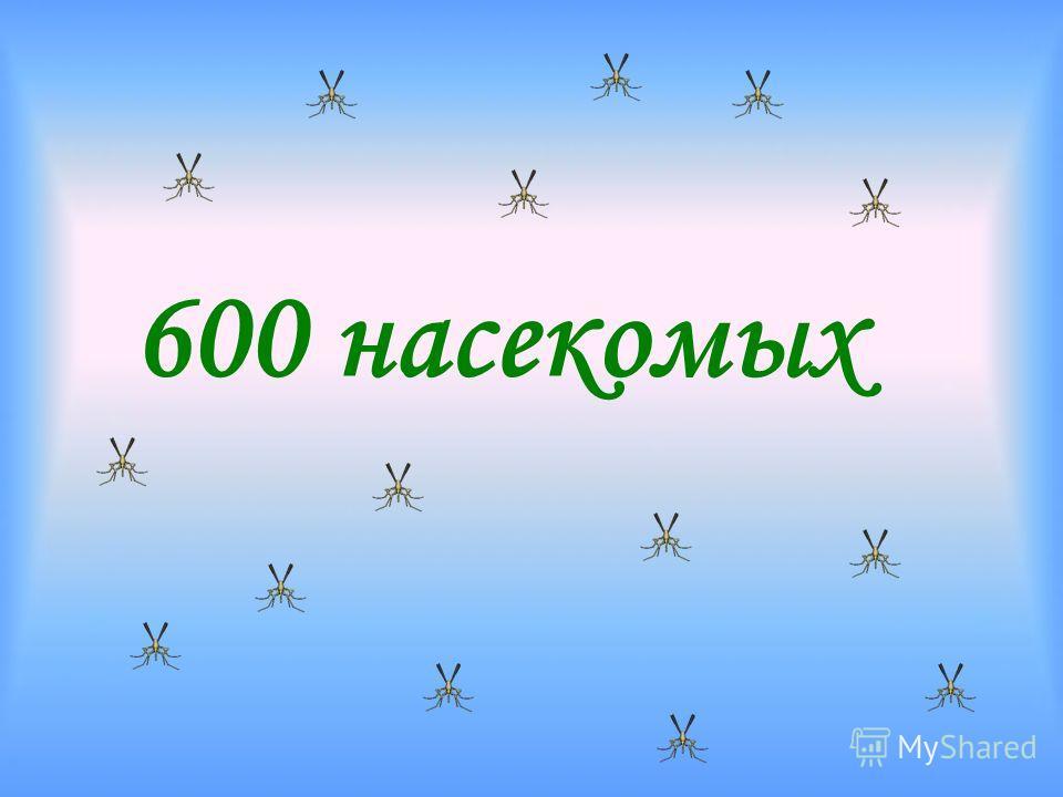 600 насекомых