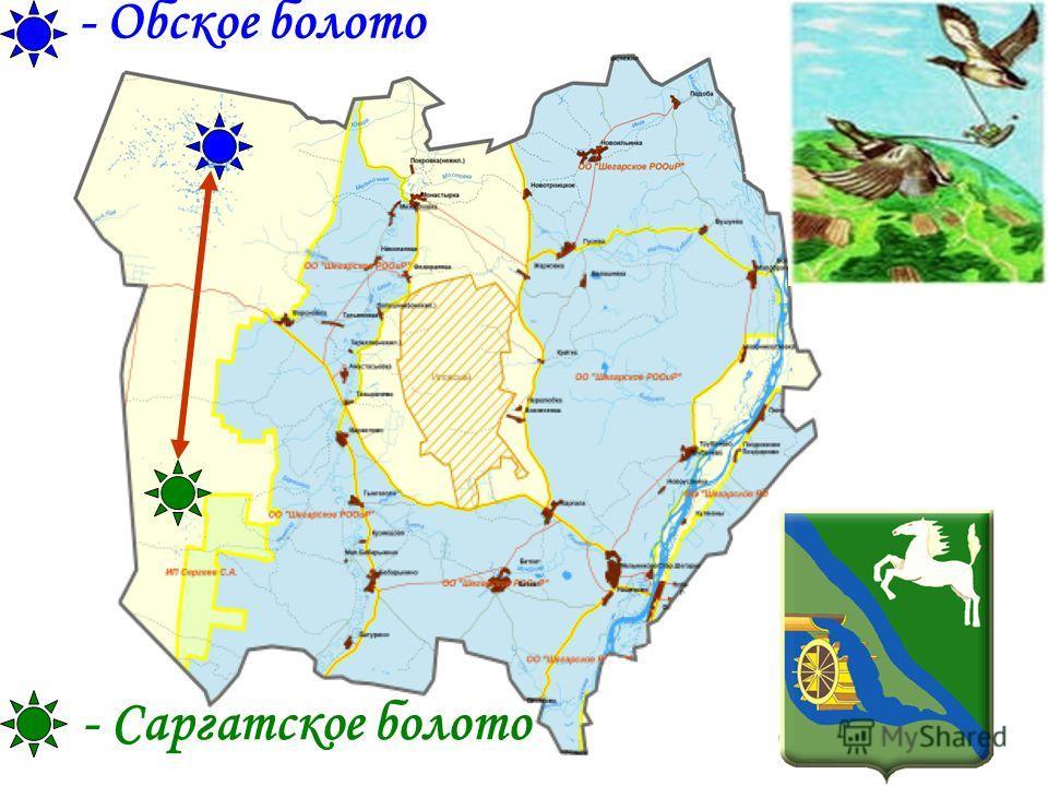 - Обское болото - Саргатское болото