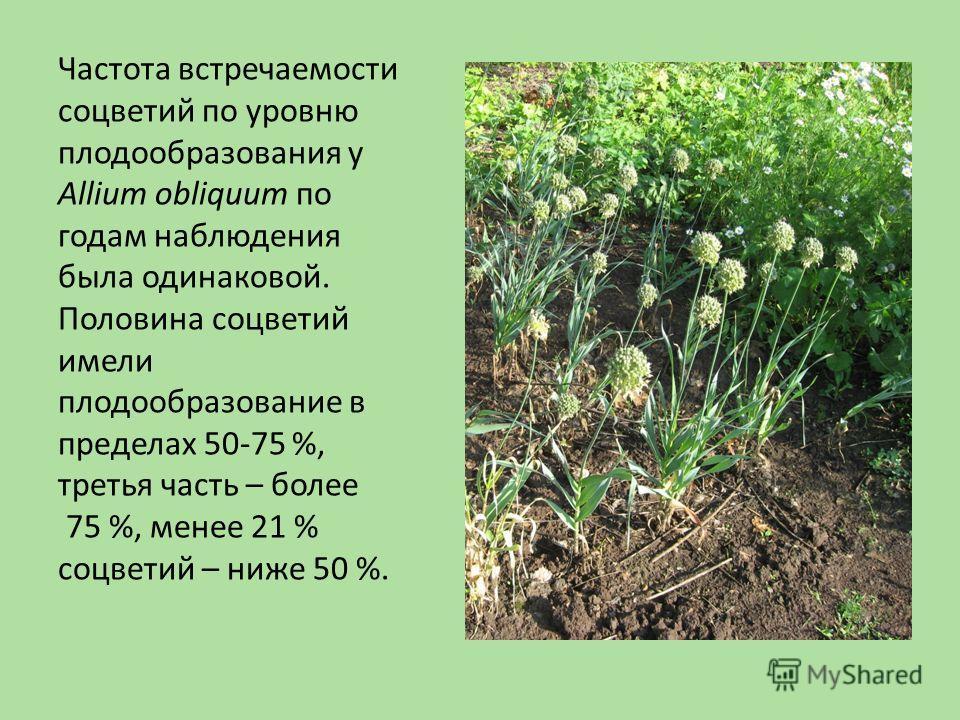 Частота встречаемости соцветий по уровню плодообразования у Allium obliquum по годам наблюдения была одинаковой. Половина соцветий имели плодообразование в пределах 50-75 %, третья часть – более 75 %, менее 21 % соцветий – ниже 50 %.