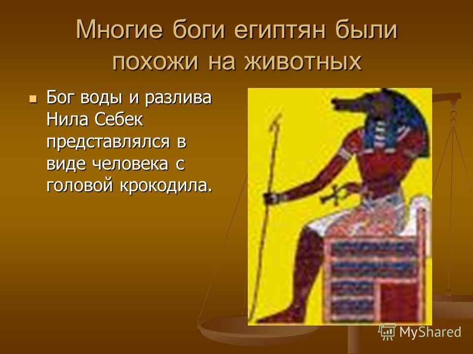 Многие боги египтян были похожи на животных Бог воды и разлива Нила Себек представлялся в виде человека с головой крокодила. Бог воды и разлива Нила Себек представлялся в виде человека с головой крокодила.