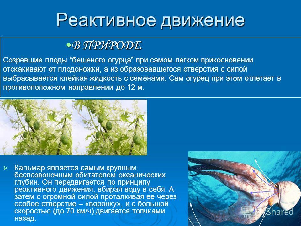 Реактивное движение В ПРИРОДЕ Кальмар является самым крупным беспозвоночным обитателем океанических глубин. Он передвигается по принципу реактивного движения, вбирая воду в себя. А затем с огромной силой проталкивая ее через особое отверстие – «ворон