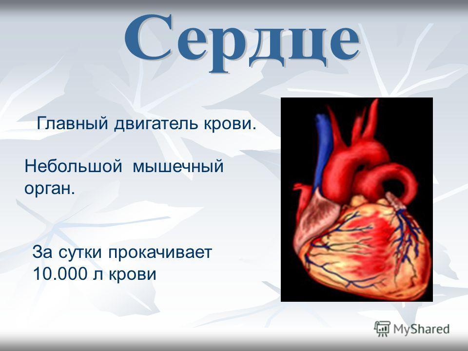 Главный двигатель крови. Небольшой мышечный орган. За сутки прокачивает 10.000 л крови