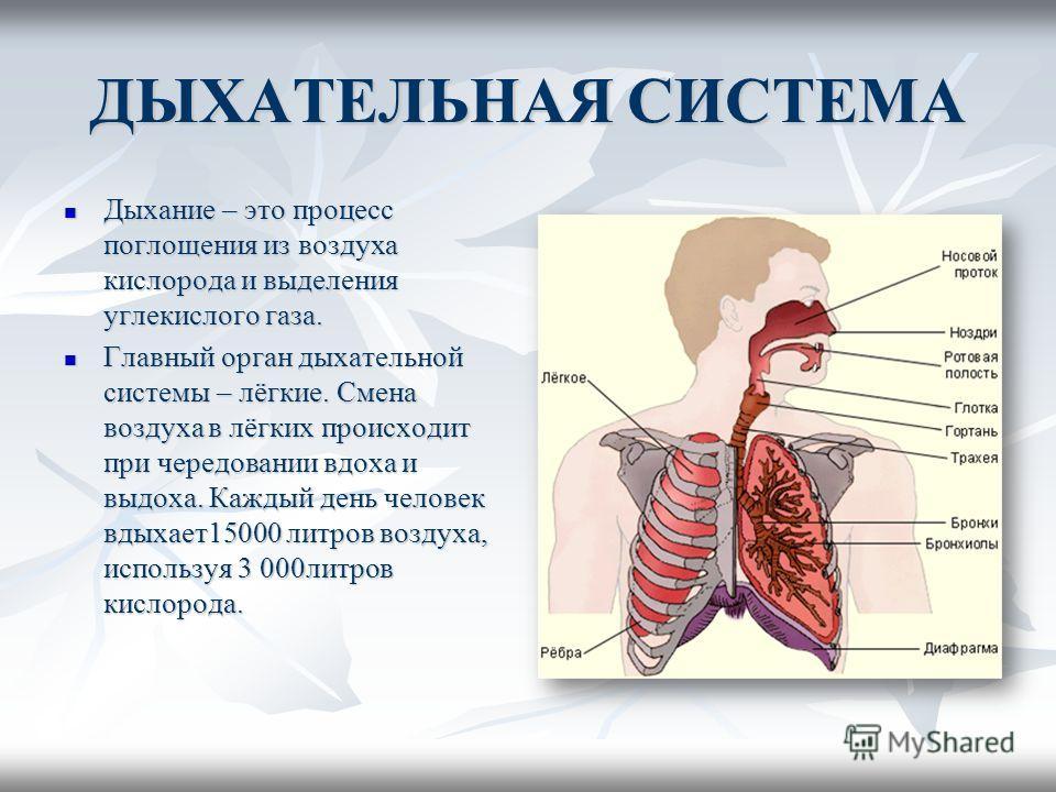ДЫХАТЕЛЬНАЯ СИСТЕМА Дыхание – это процесс поглощения из воздуха кислорода и выделения углекислого газа. Дыхание – это процесс поглощения из воздуха кислорода и выделения углекислого газа. Главный орган дыхательной системы – лёгкие. Смена воздуха в лё