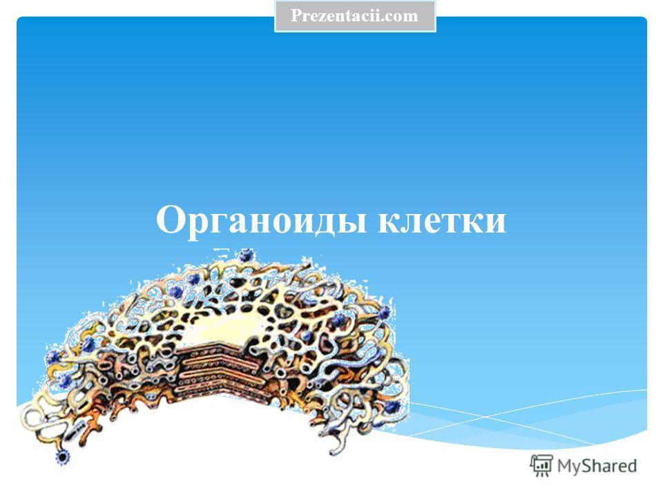 Органоиды клетки Prezentacii.com