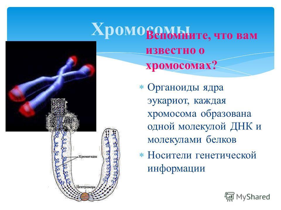 Органоиды ядра эукариот, каждая хромосома образована одной молекулой ДНК и молекулами белков Носители генетической информации Хромосомы Вспомните, что вам известно о хромосомах?