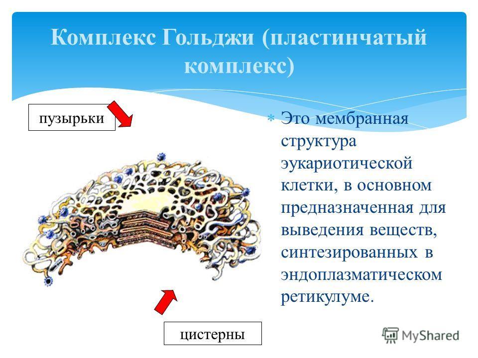 Это мембранная структура эукариотической клетки, в основном предназначенная для выведения веществ, синтезированных в эндоплазматическом ретикулуме. Комплекс Гольджи (пластинчатый комплекс) пузырьки цистерны