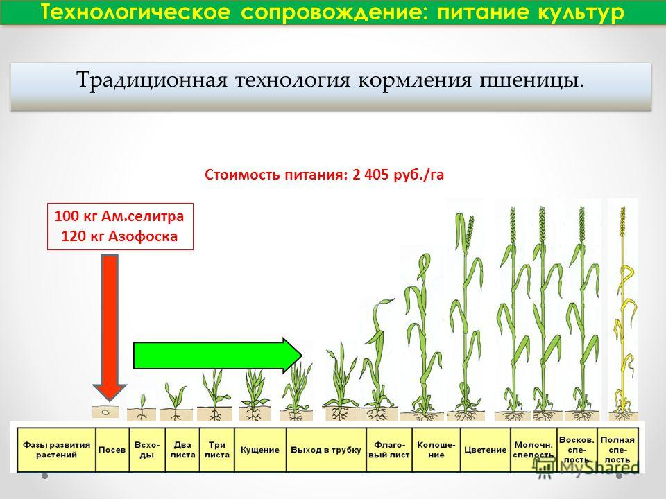 Технологическое сопровождение: питание культур 100 кг Ам.селитра 120 кг Азофоска N Стоимость питания: 2 405 руб./га Традиционная технология кормления пшеницы.