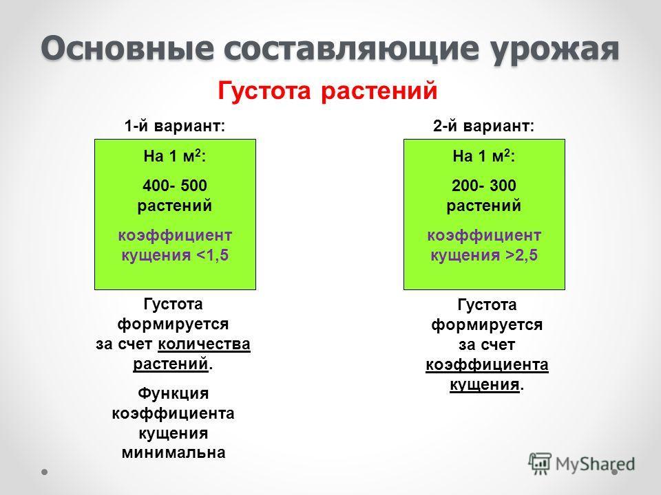 Основные составляющие урожая 1-й вариант: На 1 м 2 : 400- 500 растений коэффициент кущения 2,5 Густота растений Густота формируется за счет количества растений. Функция коэффициента кущения минимальна Густота формируется за счет коэффициента кущения.