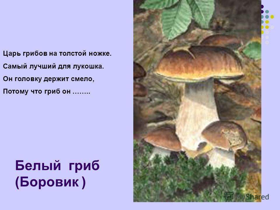 Белый гриб (Боровик ) Царь грибов на толстой ножке. Самый лучший для лукошка. Он головку держит смело, Потому что гриб он ……..
