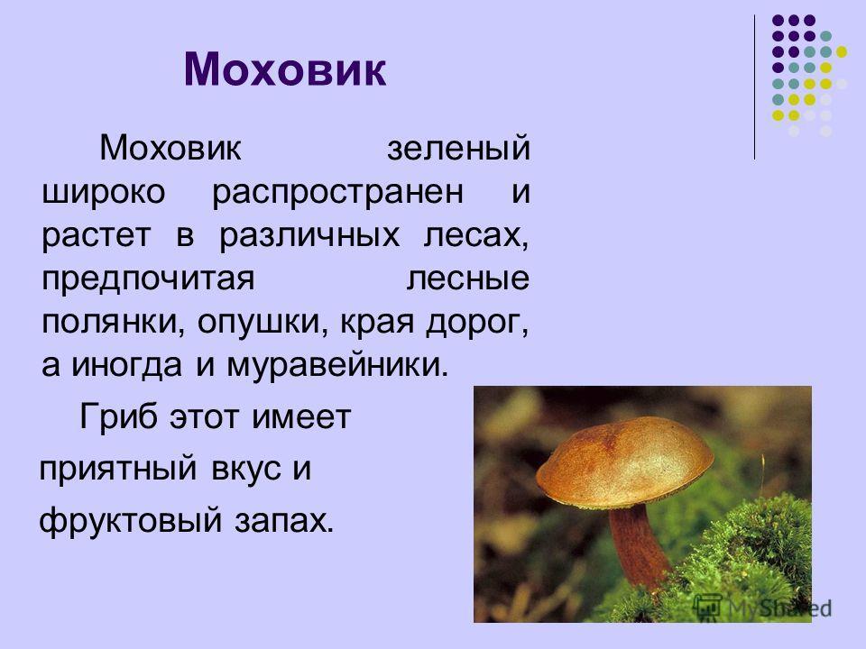 Моховик зеленый широко распространен и растет в различных лесах, предпочитая лесные полянки, опушки, края дорог, а иногда и муравейники. Гриб этот имеет приятный вкус и фруктовый запах.