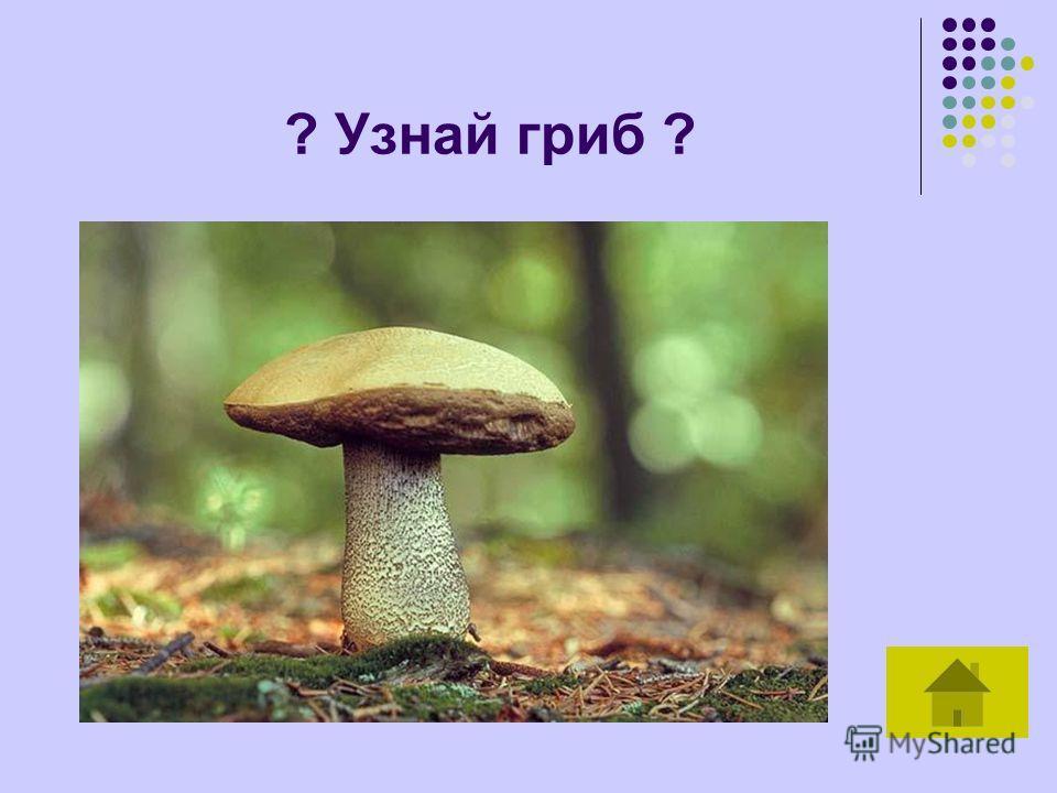 ? Узнай гриб ?