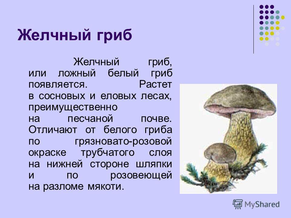 Желчный гриб, или ложный белый гриб появляется. Растет в сосновых и еловых лесах, преимущественно на песчаной почве. Отличают от белого гриба по грязновато-розовой окраске трубчатого слоя на нижней стороне шляпки и по розовеющей на разломе мякоти.