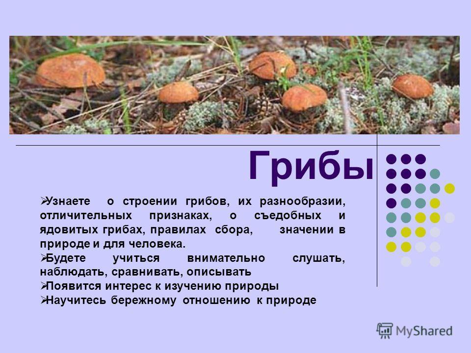 Грибы Узнаете о строении грибов, их разнообразии, отличительных признаках, о съедобных и ядовитых грибах, правилах сбора, значении в природе и для человека. Будете учиться внимательно слушать, наблюдать, сравнивать, описывать Появится интерес к изуче