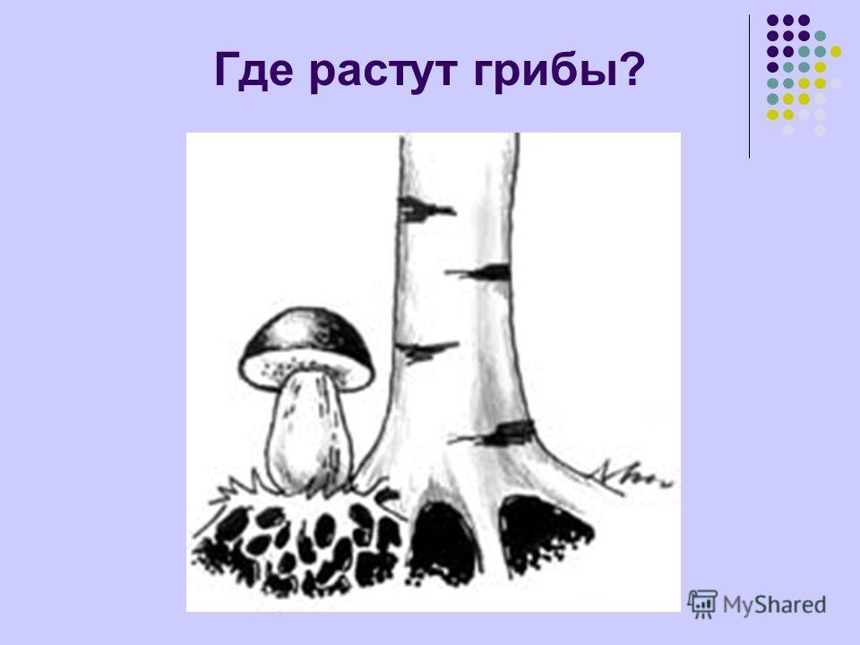Где растут грибы?