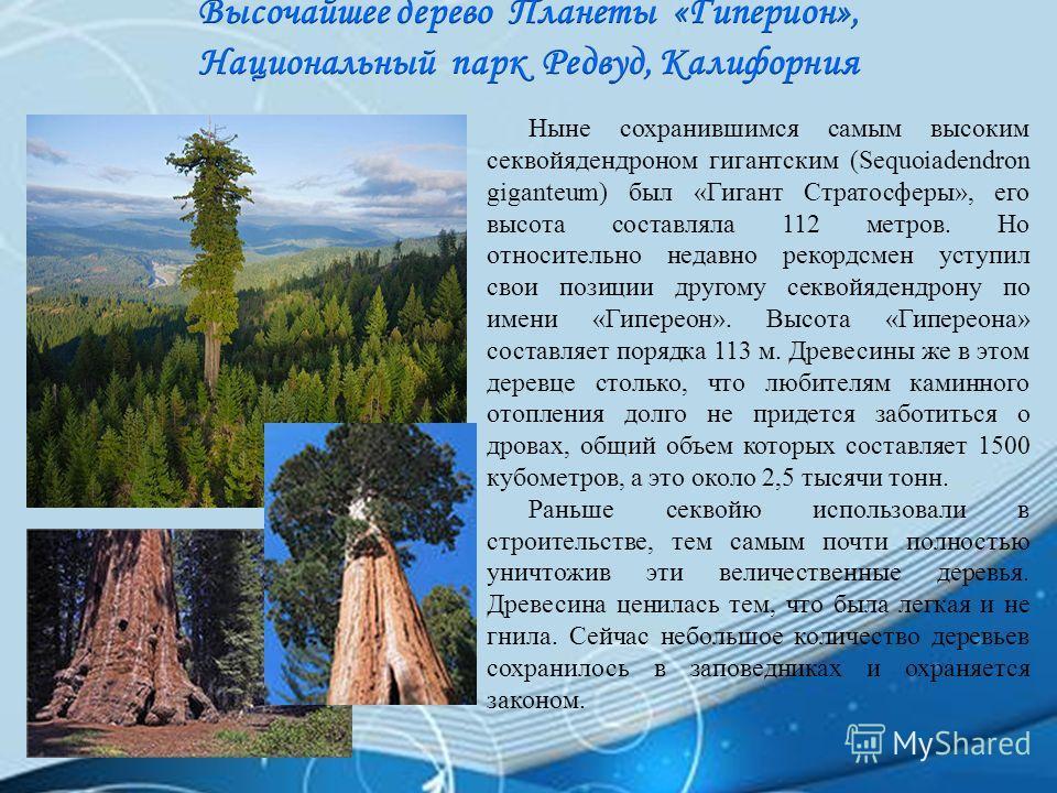 Ныне сохранившимся самым высоким секвойядендроном гигантским (Sequoiadendron giganteum) был «Гигант Стратосферы», его высота составляла 112 метров. Но относительно недавно рекордсмен уступил свои позиции другому секвойядендрону по имени «Гипереон». В
