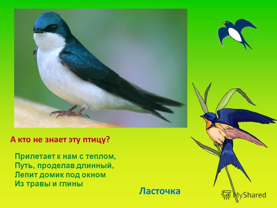 А кто не знает эту птицу? Ласточка Прилетает к нам с теплом, Путь, проделав длинный, Лепит домик под окном Из травы и глины