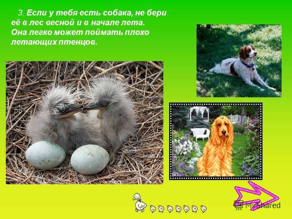 3. Если у тебя есть собака, не бери её в лес весной и в начале лета. Она легко может поймать плохо летающих птенцов.