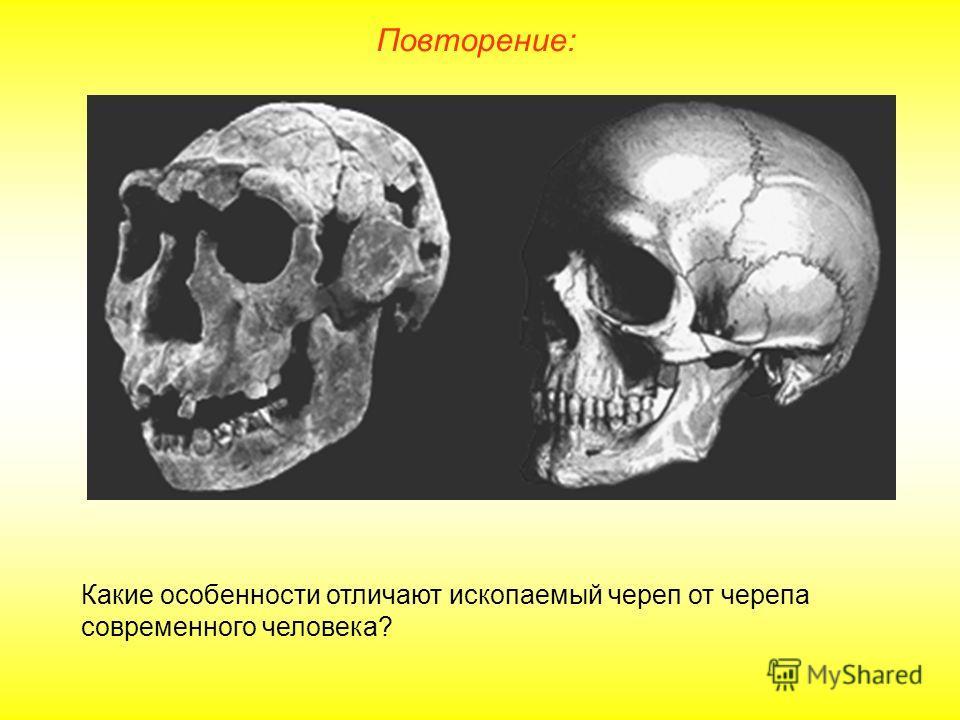 Повторение: Какие особенности отличают ископаемый череп от черепа современного человека?