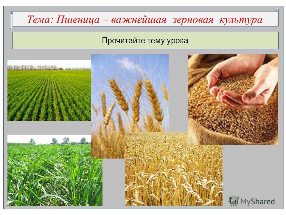 Прочитайте тему урока Тема: …..ца – важнейшая з…овая к…тураТема: Пшеница – важнейшая зерновая культура