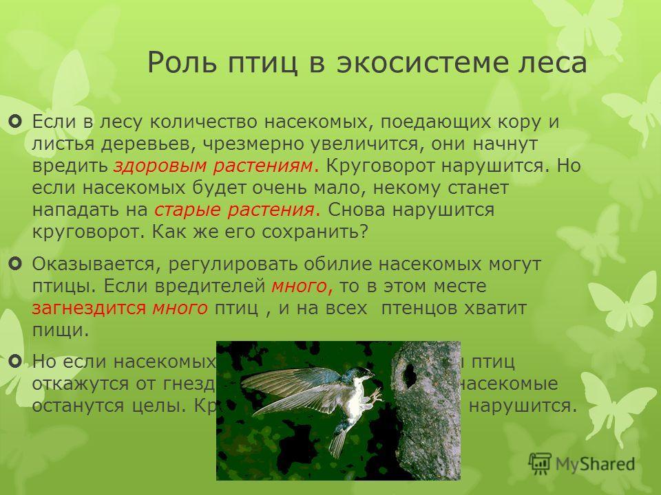 Роль птиц в экосистеме леса Если в лесу количество насекомых, поедающих кору и листья деревьев, чрезмерно увеличится, они начнут вредить здоровым растениям. Круговорот нарушится. Но если насекомых будет очень мало, некому станет нападать на старые ра