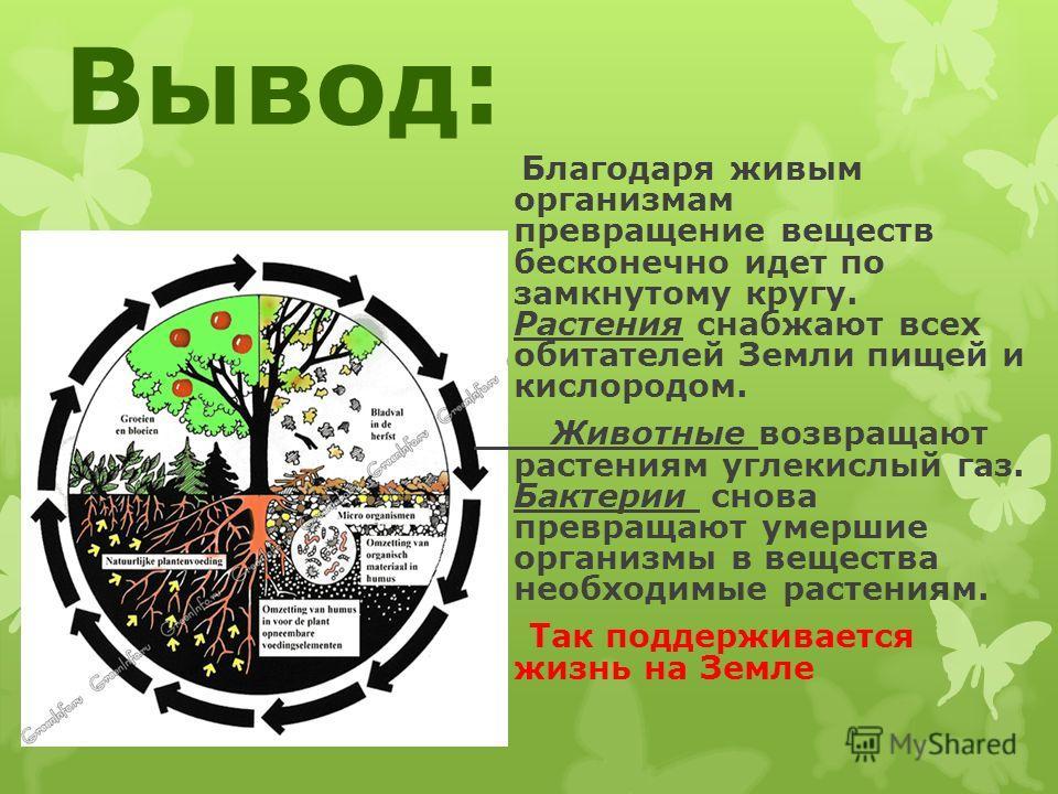 Вывод: од Благодаря живым организмам превращение веществ бесконечно идет по замкнутому кругу. Растения снабжают всех обитателей Земли пищей и кислородом. Животные возвращают растениям углекислый газ. Бактерии снова превращают умершие организмы в веще