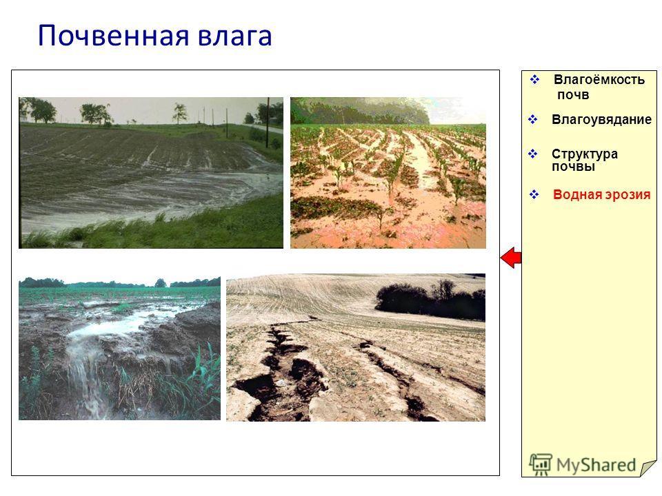 Почвенная влага Влагоёмкость почв Влагоувядание Структура почвы Водная эрозия