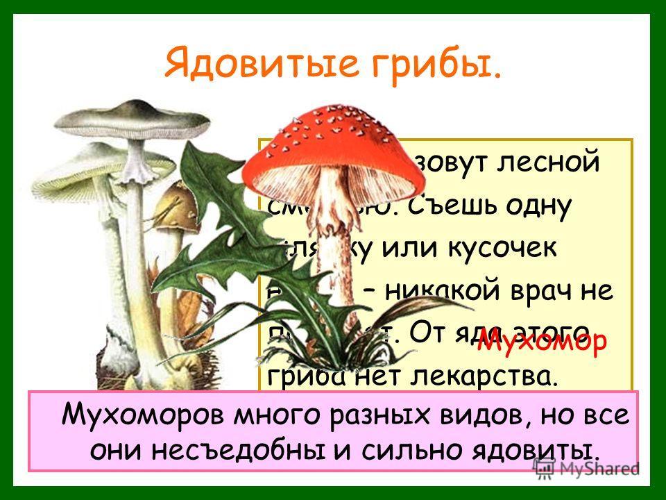 Ядовитые грибы. Этот гриб зовут лесной смертью. Съешь одну шляпку или кусочек ножки – никакой врач не поможет. От яда этого гриба нет лекарства. Бледная поганка Мухоморов много разных видов, но все они несъедобны и сильно ядовиты. Мухомор