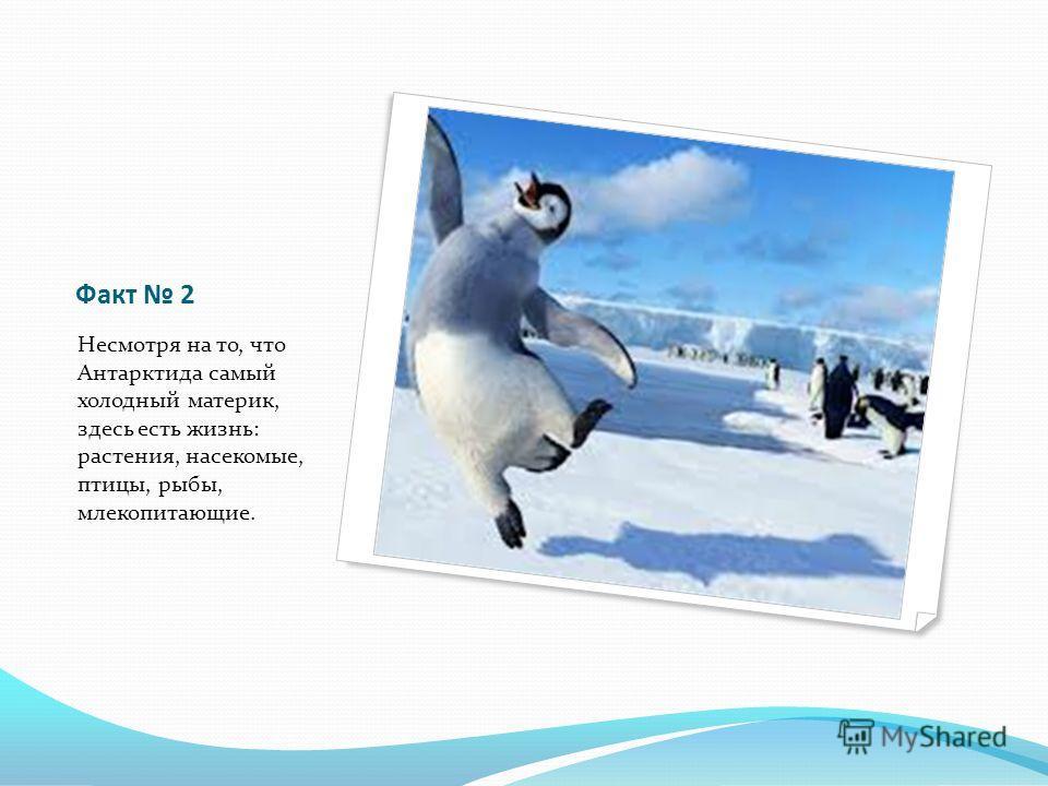 Факт 2 Несмотря на то, что Антарктида самый холодный материк, здесь есть жизнь: растения, насекомые, птицы, рыбы, млекопитающие.