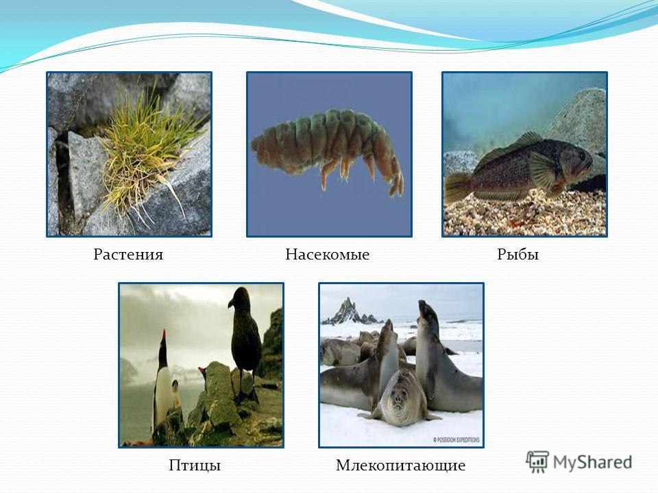 РастенияНасекомыеРыбы ПтицыМлекопитающие