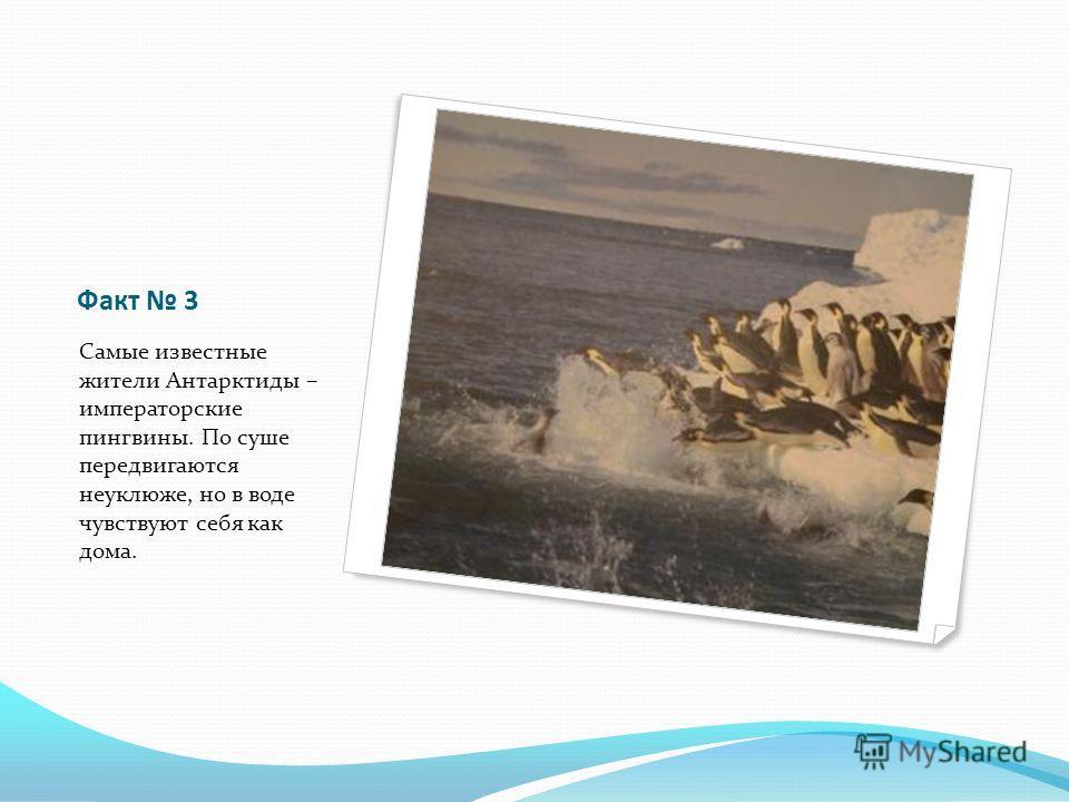 Факт 3 Самые известные жители Антарктиды – императорские пингвины. По суше передвигаются неуклюже, но в воде чувствуют себя как дома.