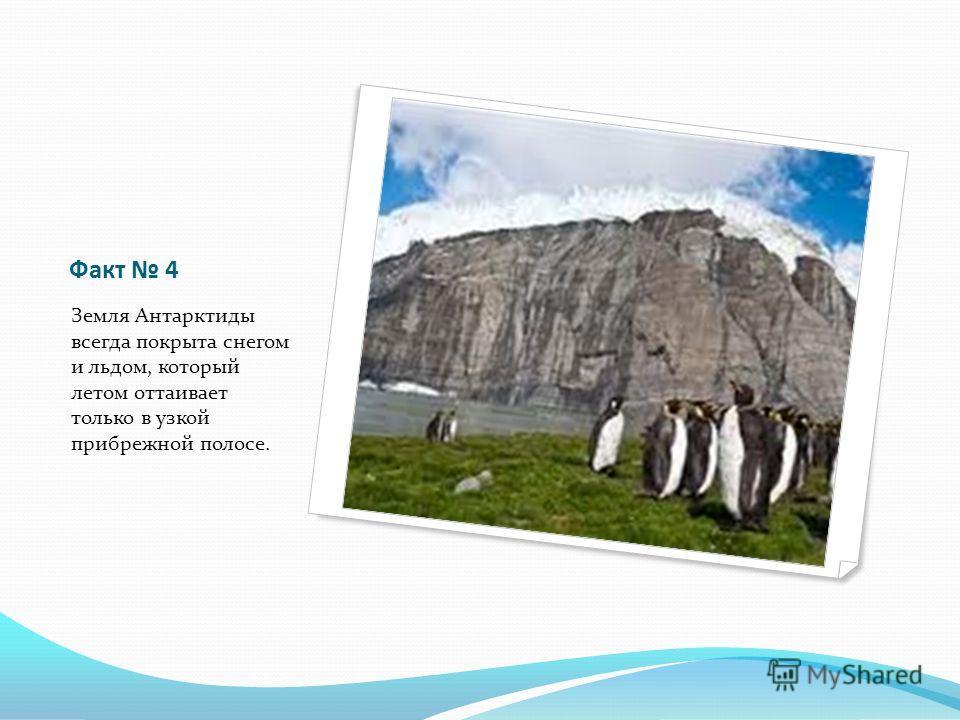 Факт 4 Земля Антарктиды всегда покрыта снегом и льдом, который летом оттаивает только в узкой прибрежной полосе.