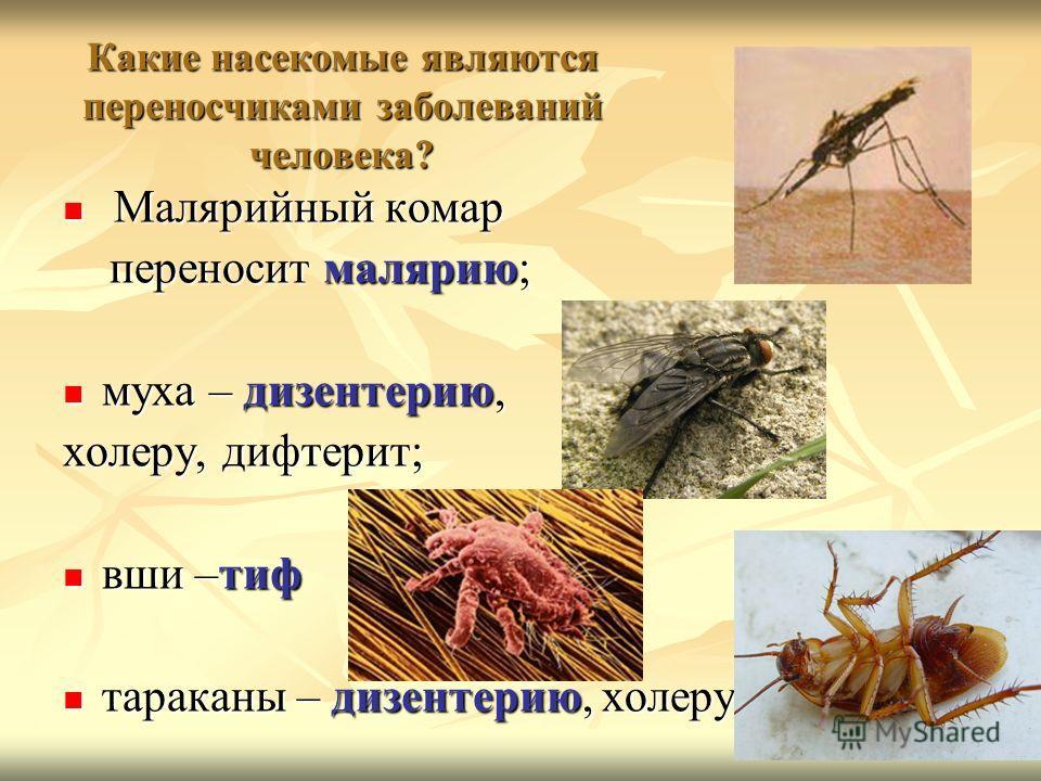 Какие насекомые являются