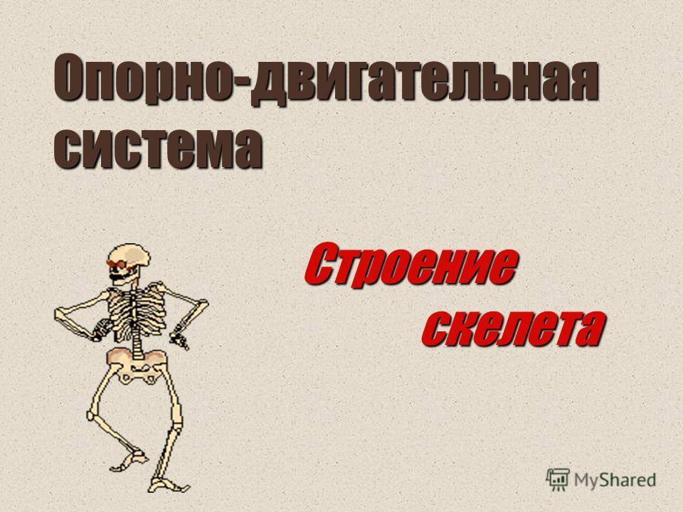Опорно-двигательная система Строение скелета скелета