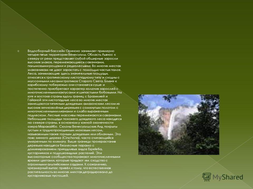 Водосборный бассейн Ориноко занимает примерно четыре пятых территории Венесуэлы. Область Льянос к северу от реки представляет собой обширные заросли высоких злаков, перемежающиеся саваннами, пальмовыми рощами и редколесьями. Во многих местах злаковни