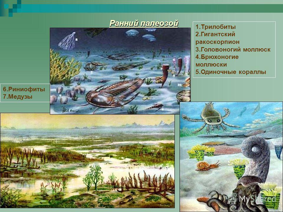 Ранний палеозой 1.Трилобиты 2.Гигантский ракоскорпион 3.Головоногий моллюск 4.Брюхоногие моллюски 5.Одиночные кораллы 6.Риниофиты 7.Медузы