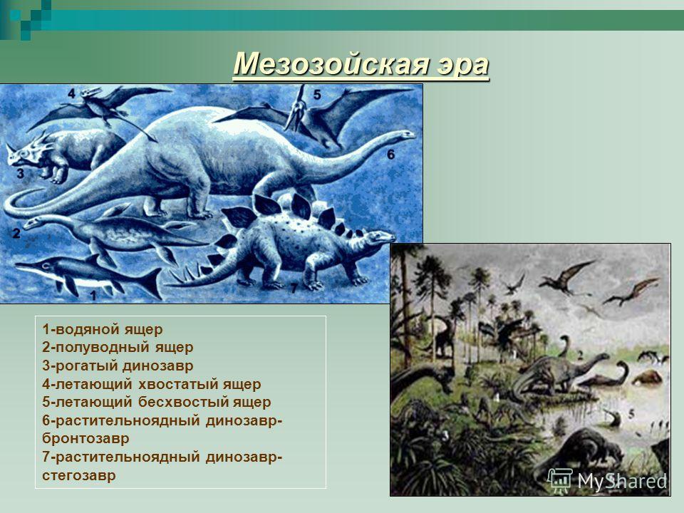 Мезозойская эра 1-водяной ящер 2-полуводный ящер 3-рогатый динозавр 4-летающий хвостатый ящер 5-летающий бесхвостый ящер 6-растительноядный динозавр- бронтозавр 7-растительноядный динозавр- стегозавр