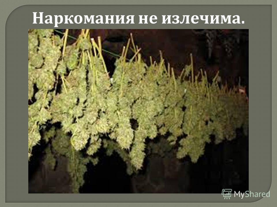 Наркомания не излечима.