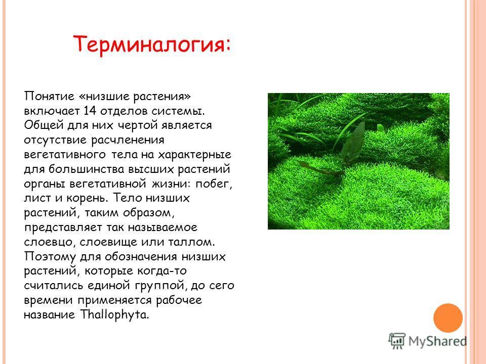 Понятие «низшие растения» включает 14 отделов системы. Общей для них чертой является отсутствие расчленения вегетативного тела на характерные для большинства высших растений органы вегетативной жизни: побег, лист и корень. Тело низших растений, таким